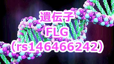 FLG遺伝子1