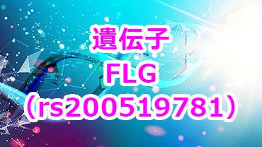 FLG遺伝子2